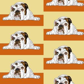 Dezy- Bulldog