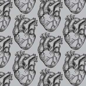 Hearts Anatomical on Soft Gray