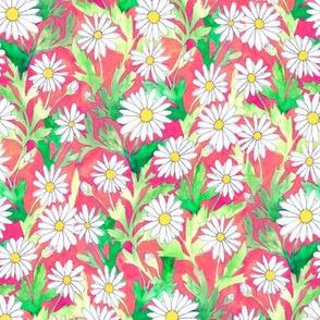 Daisies Coral