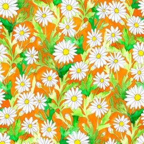 Daisies Orange