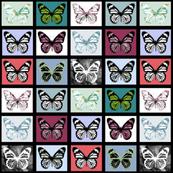 "Butterfly Collection (3"")"