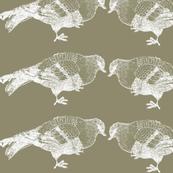 Olive Pigeon