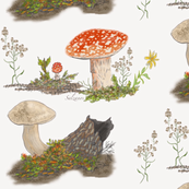 Fall Mushrooms in the Forest