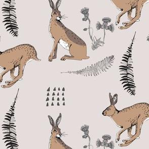 Hares grey