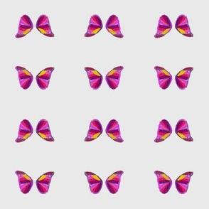 Sweet Butterfly Sw