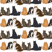 7_Cats