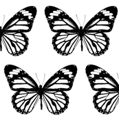 "Black & White Butterfly (6"")"