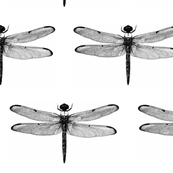 "Dragonfly (6"")"