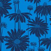 Sunshine Daisy - Indigo Cornflower