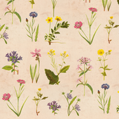 Antique Wildflowers on Paper