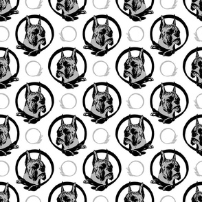 Collared Boxer portraits - gray