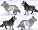 Rgray_wolves_in_snow_thumb