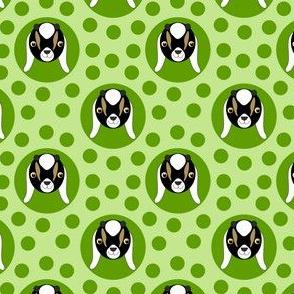 Extra Dotty Goat Kid Polka Dot