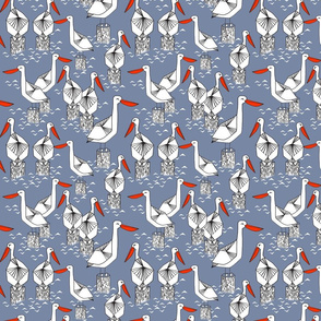 pelicans // nautical sea ocean water summer bird birds florida ocean tropical birds pelicans