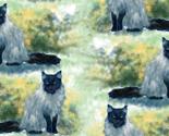 Rsmoke_maine_coon_cat_thumb