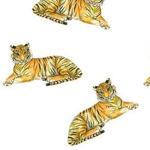 Tiger Tiger Tiger!