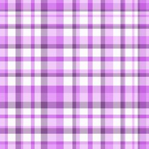 Violet Plaid