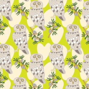 Little Owl Lime Green