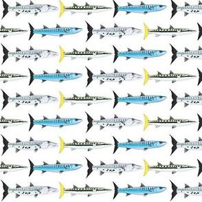 3 Barracuda