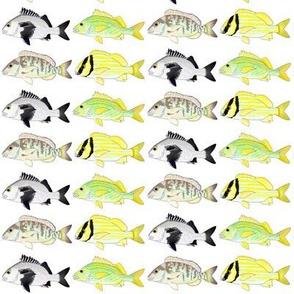4 Grunt Fish