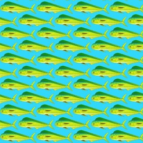 Mahi Dolphinfish in blue background