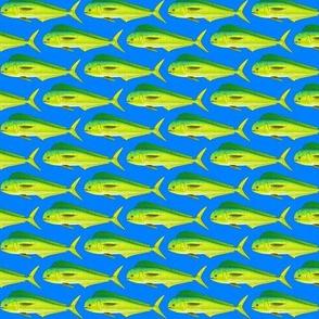 Mahi-mahi Dolphinfish dark blue background