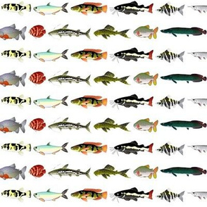 23 Amazon River Fish