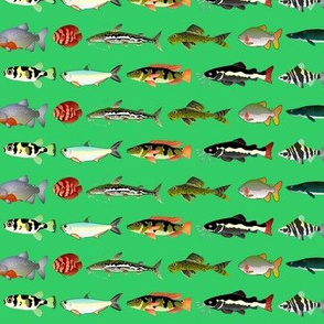 23 Amazon River Fish on green