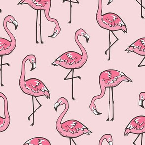 Flamingos in Pink
