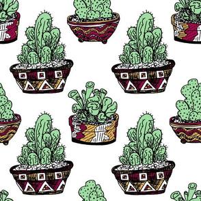 Cactus Pots