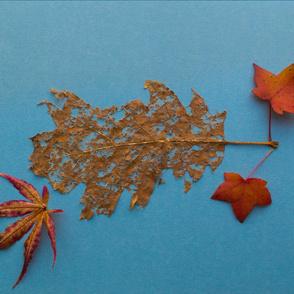 leaf_300