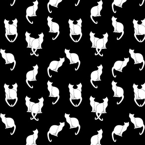 Haunted White Cats on Black