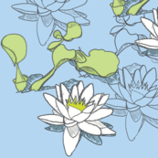 Water_Lily_150x2blue