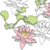 Water_Lily_150x2white pinkC