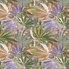 Cannabis Crowd