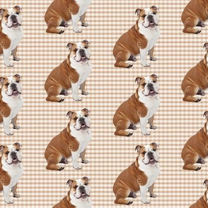 Bulldog on Plaid
