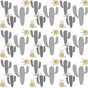 sunshine cactus
