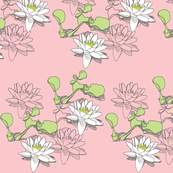 Water_Lily 15Ox2pinkA