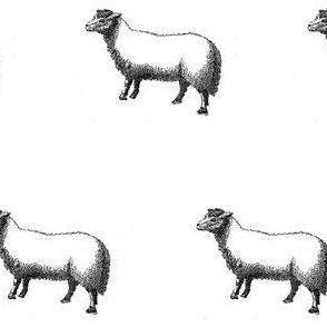 Numerable Sheep II
