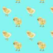 Baby Chicks on Aqua, Easter Spring