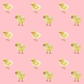 Baby Chicks on Pink, Easter Spring