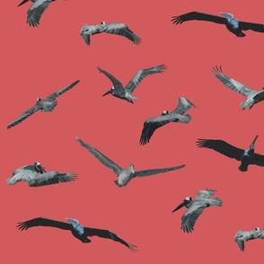 Pelicans in Flight - Coral