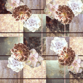 Succulents_1_Dusty__Pink