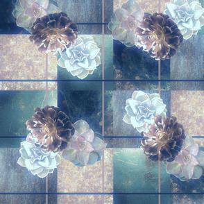 Succulents_4_Hazy_Aqua