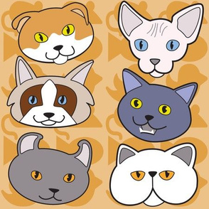 Cats, cats, and a few more cats!