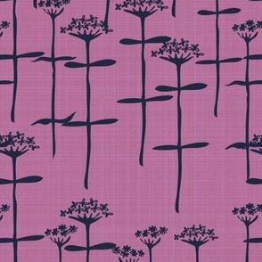 verbenabonariensis_orchid