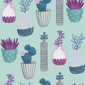 Succulents - sea foam