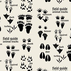 Woodland animal tracks
