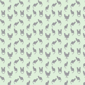 gray cats on cucumber