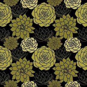 Succulents on black
